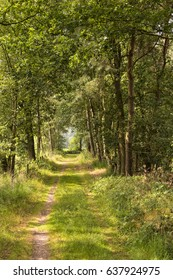 A forest road in the Kampina, a nature area in the Netherlands