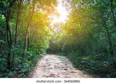 Forest road. Landscape