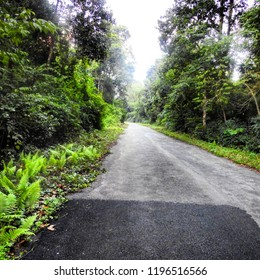 Forest road of Lataguri, West Bengal