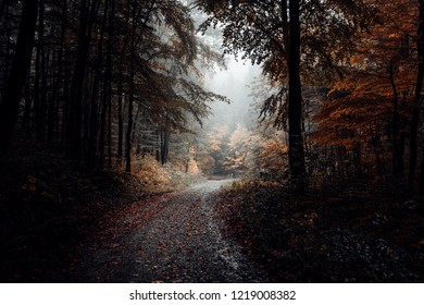 The forest road leads through a autumn rainy forest