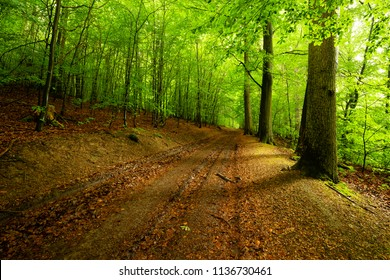A forest road leads through the middle of a green lush forest