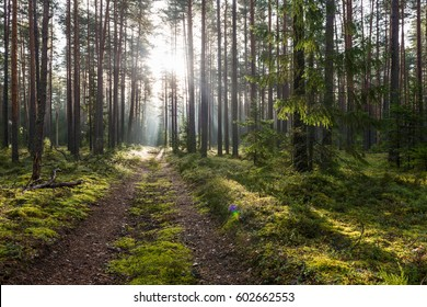 Forest road in the morning with bright sunlight