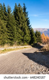 Forest road in the mountains. Roadside fir trees.