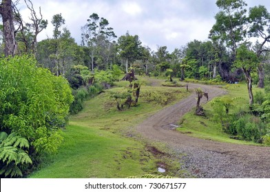 Forest Road on Big Island, Hawaii, United States