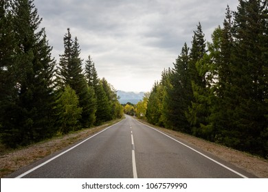 Forest road on a cloudy day. National Park, Siberia