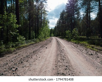 Forest road on a summer day. trees and plants. gravel road