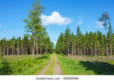 Forest road over a clearcut area to the woods