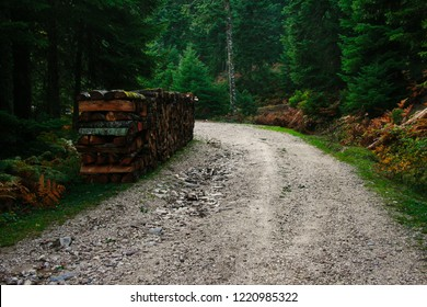 forest road at Pertouli, Trikala, Thessaly, Greece