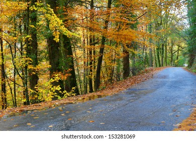 forest road at the portuguese national park