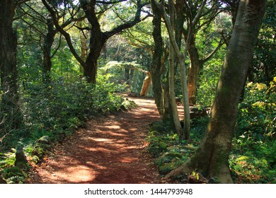 """It is a forest road scenery called """"Visa Forest"""" in Jeju."""