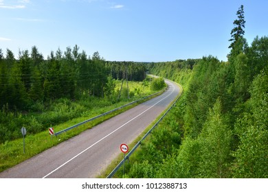 forest, road, summer, freedom