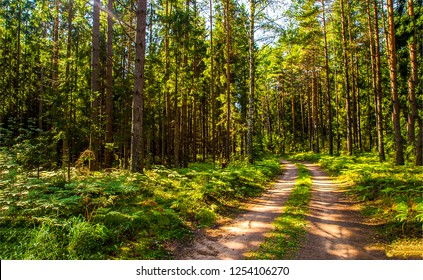 Forest road sunlight view. Deep forest road view. Forrest road scene. Forest road landscape