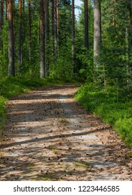 Forest road in Suomi forest