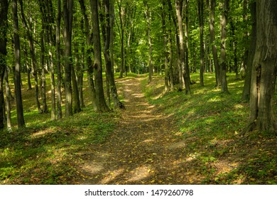 forest road symmetry natural scenic landscape picture in early autumn September season time with a little bit falling leaves and green trees