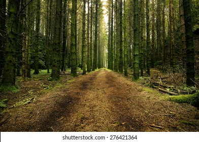 Forest road through a swedish spruce forest