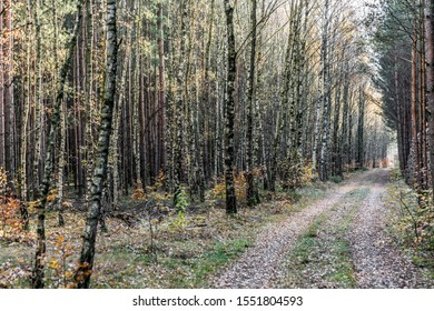 Forest road with trees, birches, foliage in autumn Germany