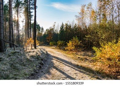 Forest road with trees, foliage in backlight, autumn, Germany