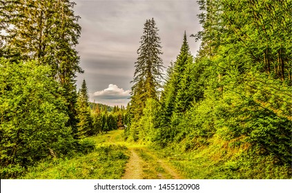 Forest road under dark cloudy sky. Forest road view. Forest road scene. Forest road landscape