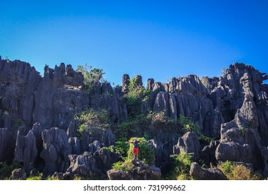 Forest of Rock Rammang-Rammang in Maros near Makassar - South Sulawesi Indonesia. The local people often called this place Hutan Batu.