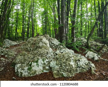 forest and rocks