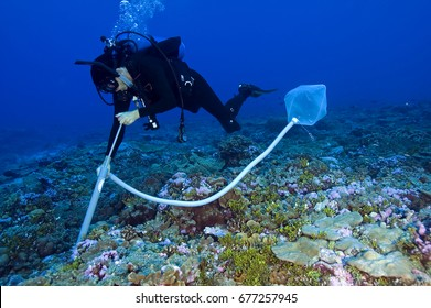 Forest Rohwer from San Diego State University collecting water on the reef for collection of viruses and bacteria living around and on coral reefs. Palmyra Atoll USA. July 2005.