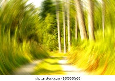 Forest Rotating Vertigo View Illness Sickness Nausea