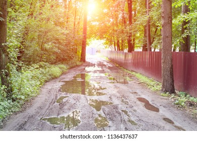 Forest and rural road