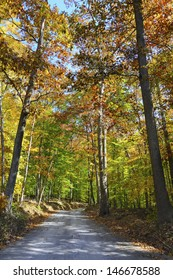 Forest and Rural Road in Autumn