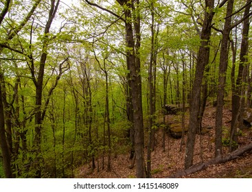 A forest scene in the Allegheny National Forest in Warren County, Pennsylvania, USA