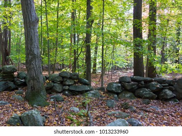 Forest scene with crumbling stone wall. Peaceful woods.