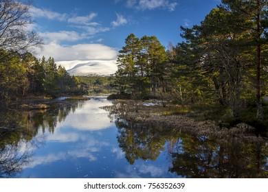 Forest scene on Loch Morlich in the Scottish Highlands during winter