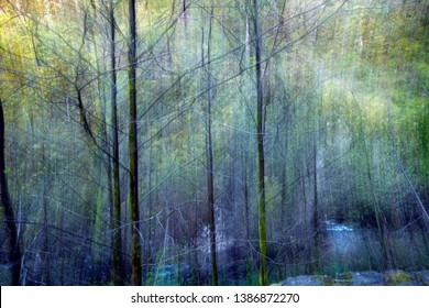 Forest scene with texture and water