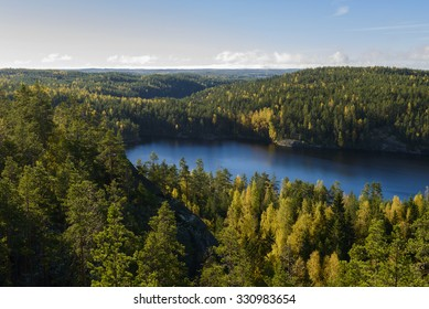 Forest scenery in national park