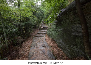Forest Scenery, forest trail in Mount Lu, Lushan in Jiujiang City, Jiangxi Province China. Dense forest with heavy mist and fog in the background, Lushan UNESCO Global Geopark, World Heritage site.
