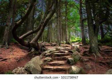 Forest in Scotland, United Kingdom