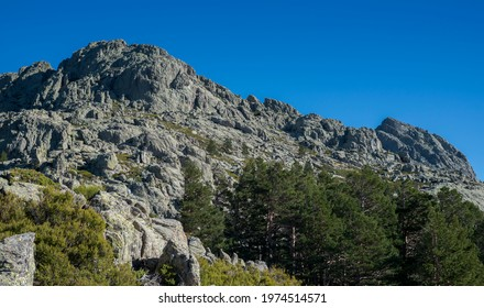 Forest of Scots pine tree, Pinus sylvestris, and high-mountain scrublands. Photo taken in Guadarrama Mountains National Park, province of Madrid, Spain