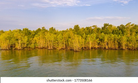 The forest in the sea. Pulau Indah at the Klang Valley, Malaysia. Rainforest end in the strait of Malacca. Tropical trees at the Malaysian shore near the Port of Klang. Idyllic habitat for wildlife