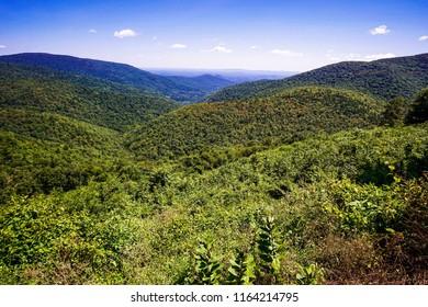 forest in shenandoah