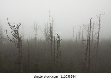 A forest shrouded in fog.  Clingman's Dome, Great Smoky Mountains National Park, USA.