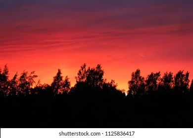 Forest silhouette with bright red sunset sky