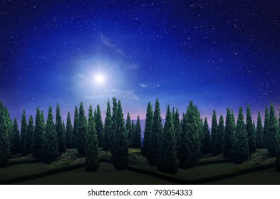forest silhouette in the dark night with beautiful full moon