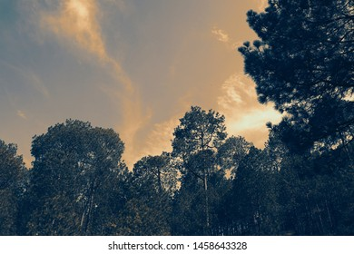 Forest Silhouette at Kasauli Valley