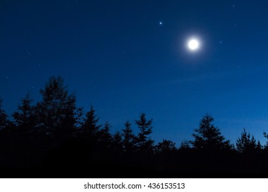 forest in silhouette with moon and stars in the background night sky