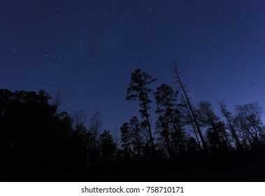 Forest silhouetted by a bright night sky full of stars