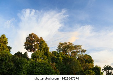 Forest and sky in warm evening sunlight