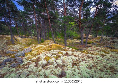 Forest in a small island during Midsummer in the Swedish Archipelago, Sweden