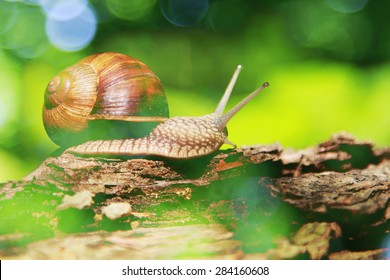 forest snail on big branch gliding ,nature background