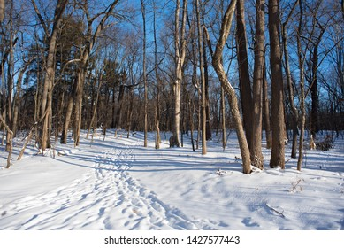 Forest In The Snow In Northwest Ohio