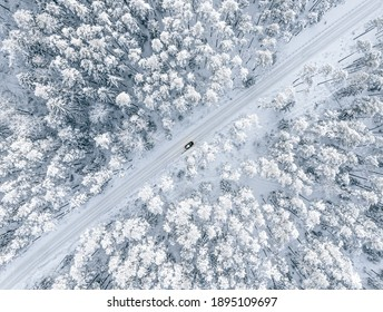 Forest in snow. Snowy forest road. Forest road from above