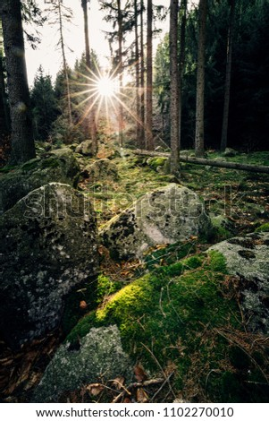 Forest soil with greenery and sunshine
